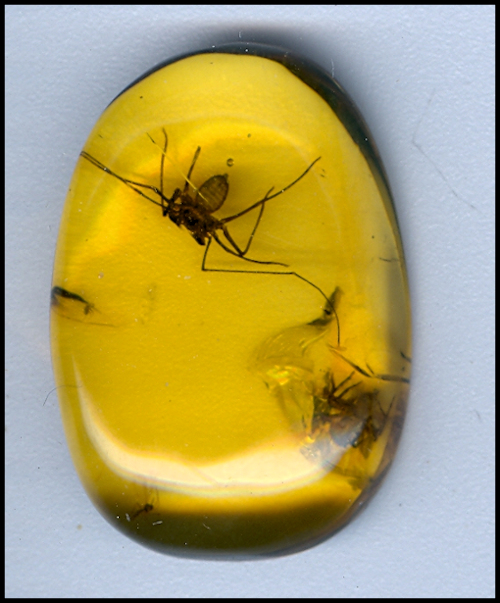 Dominican Repulic Amber with Fossils