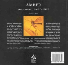 Amber, The Natural Time Capsule