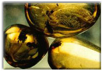 images of amber