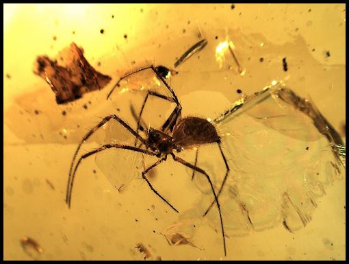 Termites Chiapas Amber