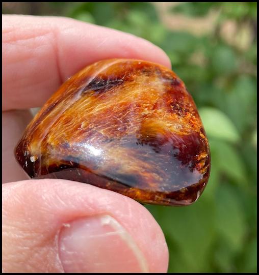 Chiapas Amber Monster 8 KG