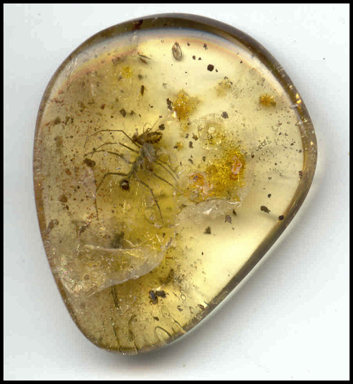 Preying Mantis In amber - Chiapas