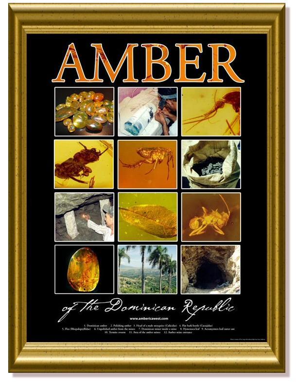 Amber_Postersm1_frame.jpg