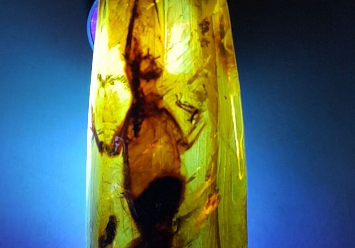 Lizard in Amber Chiapas